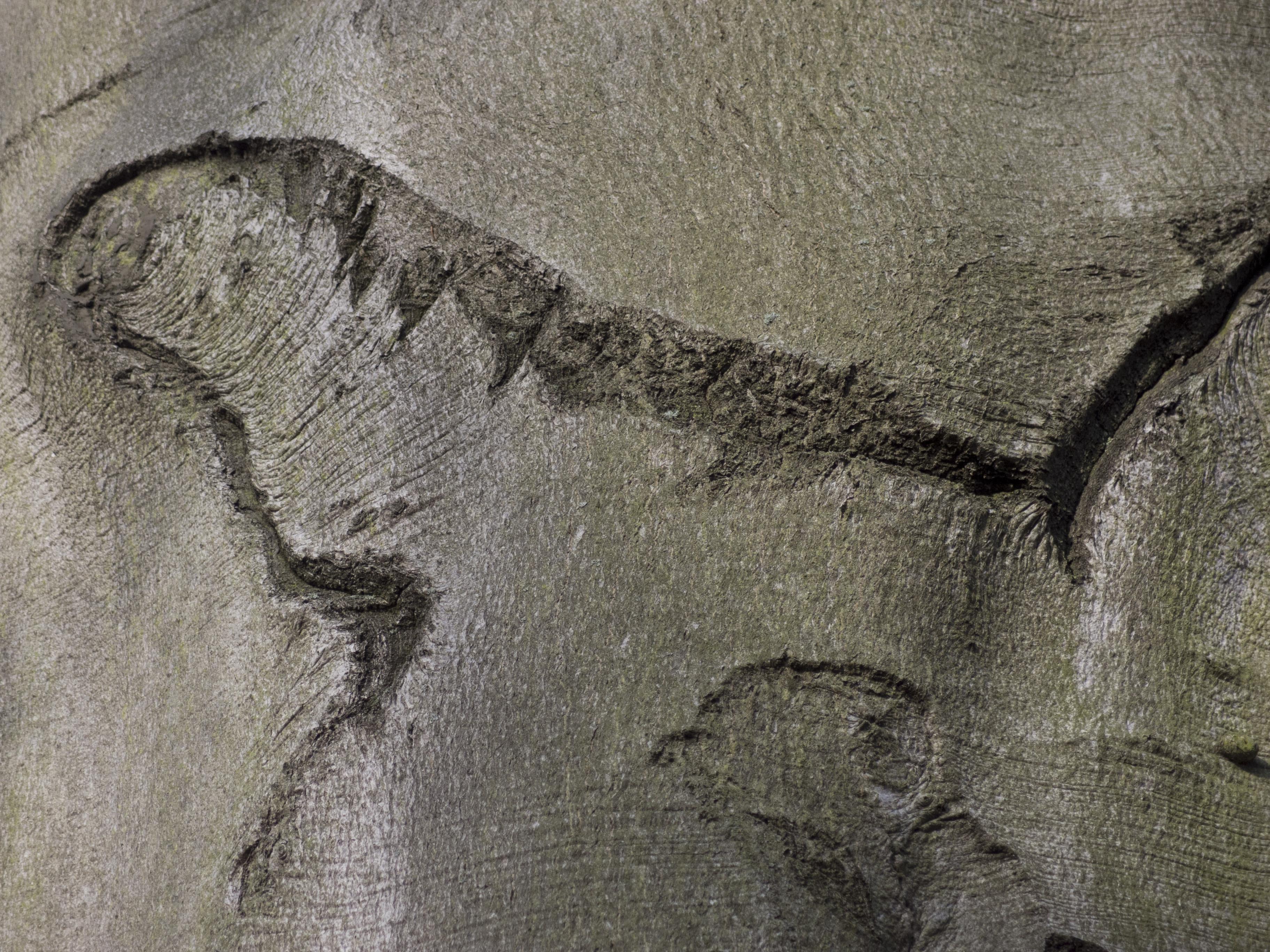 Baum im Garten vom Diakonie-Hospiz Wannsee